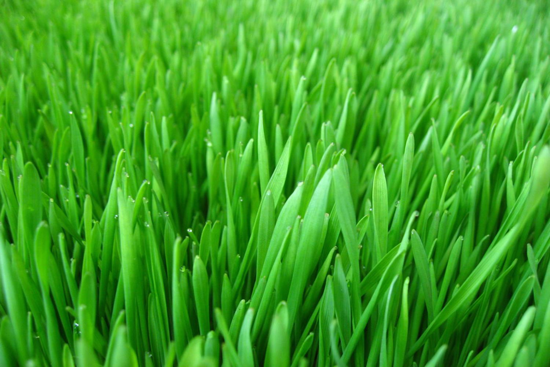 Как сделать газон реалестичней вшопе